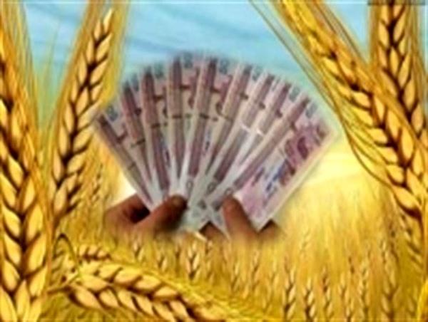 خریداری 150 هزار تن گندم از کشاورزان قزوینی