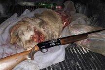 شکارچی غیرمجاز در لرستان دستگیر شد