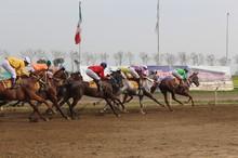 هفته پایانی و قهرمانی مسابقات اسبدوانی گنبدکاووس برگزار شد
