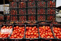 خرید ۲ هزار تن گوجه فرنگی با نرخ توافقی در همدان