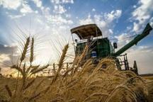 150 هزار تن گندم و جو در پارس آباد تولید می شود
