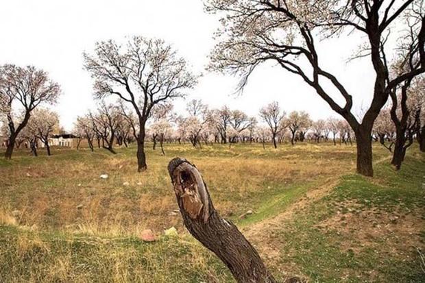 بسته سیاستی باغستان قزوین در راستای تحقق شهر پایدار است