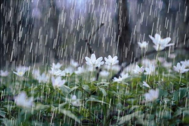 37.2 میلیمتر باران در شیروان خراسان شمالی بارید