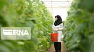بیش از ۲۲۰۴ میلیارد ریال تسهیلات به بخش کشاورزی کردستان پرداخت شد