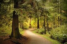 توجه ویژه ای به مسائل زیست محیطی کهگیلویه و بویراحمد شود
