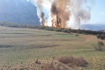 آتش دست بردار منطقه حفاظت شده شیرین بهار اندیکا نیست