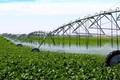 70 درصد اراضی کشاورزی سمنان به آبیاری نوین مجهز نیست