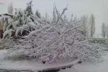 بارش برف 80روستای بخش لاریجان آمل را سفیدپوش کرد