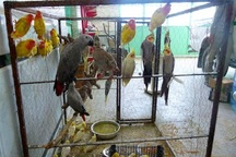 هنگ مرزی خرمشهر از قاچاق 916 قطعه پرنده جلوگیری کرد
