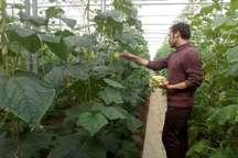 دانش آموختگان کشاورزی بومی اسدآباد در اولویت واگذاری شهرک گلخانه ای