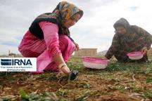 صندوق خُرد زنان روستایی از تسهیلات اشتغالزایی سهمی ندارد