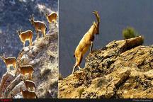 بسته شدن  یک ماهه جاده پارک ملی تندوره در خراسان رضوی