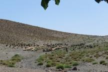 تداوم خشکسالی موجب کمبود علوفه در مناطق عشایری شد