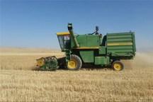 برداشت گندم در اراضی استان بوشهر آغاز شد