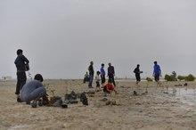 15 هزار نهال درخت حرا در ساحل بندردیر کشت شد