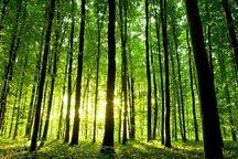 زنجان 65 هزار هکتار جنگل طبیعی به ارزش 2600میلیارد ریال دارد