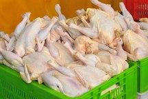 قیمت مرغ یکسان سازی شد