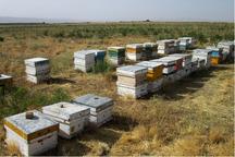 22میلیاردریال تسهیلات اشتغالزایی به روستاییان لالی پرداخت شد