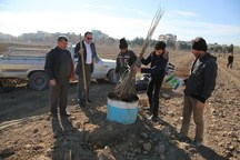 احیاء 186 هکتار از باغ تاریخی سیب مهر شهر تا پایان امسال