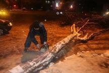 875 اصله درخت در سنندج قربانی بارش برف شد
