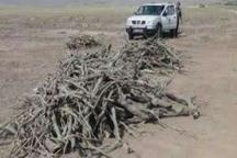 70 درصد تخریب عرصه های منابع طبیعی آران و بیدگل کنترل شده است