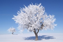 تکاب شب گذشته با منفی 16 درجه دومین شهر سرد کشور بود