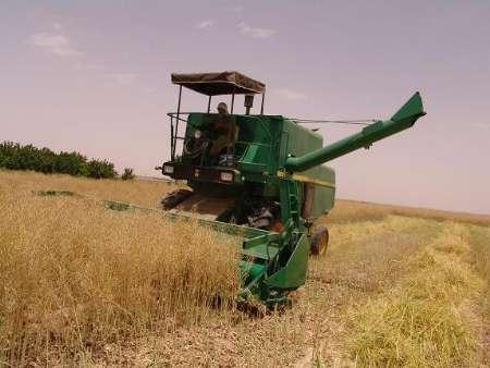 کاهش 10 درصدی تولید گندم در ابرکوه