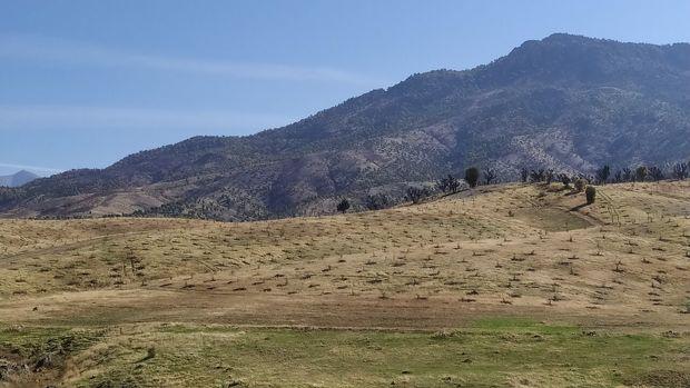 ۱۰۰ هکتار طرح توسعه جنگل در بانه اجرا شد