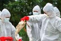 100 میلیارد ریال برای مبارزه با آنفلوانزا به همدان اختصاص یافت