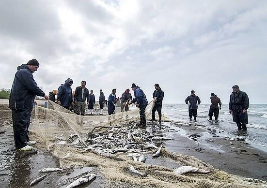 تور ماهیگیران در خزرجمع شد