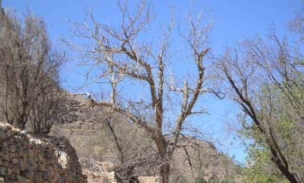 کاهش محصول کشاورزی بر  اثر تداوم خشکسالی در یزد