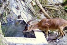 شکارچی غیرمجاز زرندی به ساخت آب انبار برای حیوانات محکوم شد