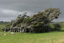 سرعت وزش باد در قصرشیرین 36 کیلومتر بر ساعت است