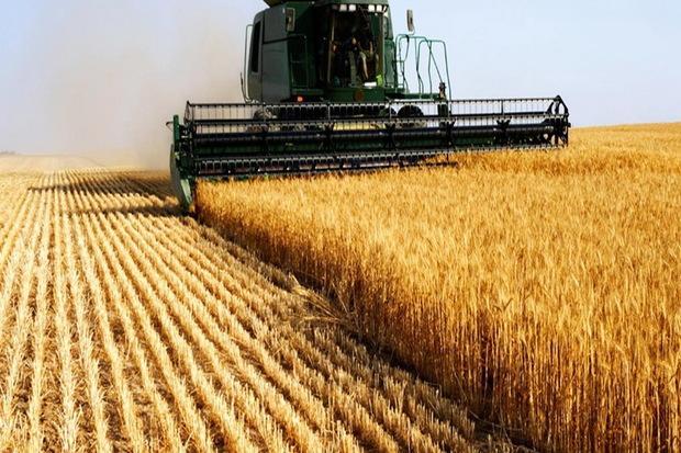 61 هزار و 500 تن گندم در نقده برداشت شد