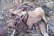 سه شکارچی غیر مجاز در گناباد دستگیر شدند