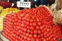 مسئولان: قیمت گوجه فرنگی آذرماه کاهش می یابد