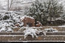 تداوم بارش برف و باران در چهارمحال و بختیاری