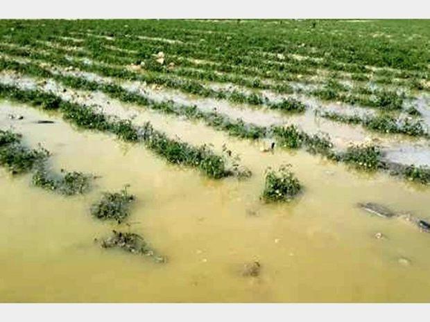 مدیریت هوشمندانه نیاز اصلی کنترل سیلابها است