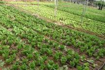 تولید ارقام کشاورزی مقاوم به شرایط نامساعد محیطی در اردبیل