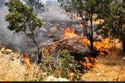"""دستگیری ۲ نفر در رابطه با آتشسوزی مراتع کوه """"رنو"""""""