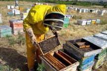 سالانه 340 تن عسل در مهاباد تولید می شود
