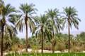 16درصد اشتغال استان بوشهردربخش کشاورزی است