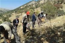 توسعه گیاهان دارویی در 2000 هکتار از مراتع آغاز شد