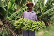 راه اندازی دانشکده کشاورزی در چابهار از ضرورت های مهم است