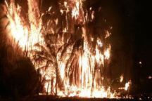 آتش بار دیگر نخلستانهای بخش جالق شهرستان سراوان را سوزاند