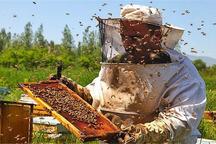 تولید عسل در گلستان پنج درصد افزایش می یابد