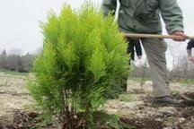 امکان ثبت نام اینترنتی برای کاشت درخت در معابر شهری ارومیه فراهم شد  متقاضیان برای ثبت نام تا 29 اسفند فرصت دارند