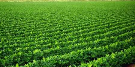 70 درصد اراضی کشاورزی خراسان شمالی سند ندارد
