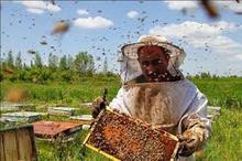 توزیع 500 کندو زنبور عسل بین بسیجیان جویای کار در ایرانشهر