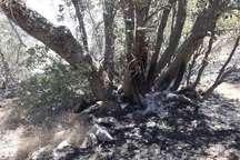 با تلاش  نیروهای امدادی و مردمی آتش در کوه دلا اندیکا مهار شد